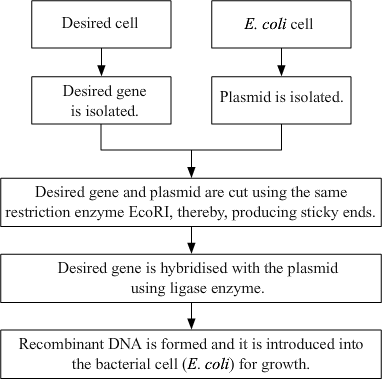 biotechnology and dna replication processes biology essay Journal of genetic engineering and biotechnology research is steadfast to rapid publication of full-length research papers that prompt huge commitment in advancing knowledge in genetic engineering and biotechnology research inquire about and give novel approach viewpoints in this research area.
