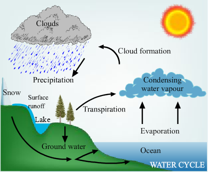 Water cycle diagram homework diagram of a life cycle the seed ccuart Choice Image