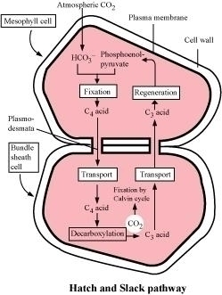 the mechanism of heart function biology essay The causes of coronary heart disease biology essay introduction nowadays coronary heart disease (chd), also known as coronary arteries disease, is one of major killer diseases in many countries.