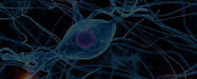 Neural Control and Coordination