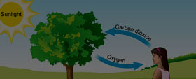Respiration in Organisms