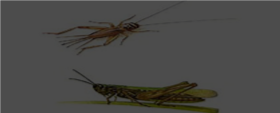 On the Grasshopper and Cricket (Poem)