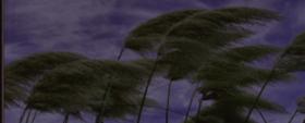 Wind (Poem)