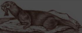 Mijbil the Otter