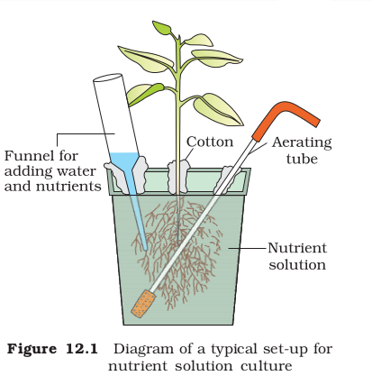 Hydroponics With Diagram Biology Mineral Nutrition 6784429