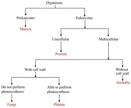 Fungi Have Saprophytic Mode Of Nutrition Whereas Plants Have Autotrophic Mode Of Nutrition This Results In The Formation Of The Five Kingdoms