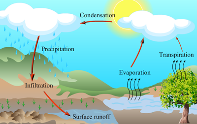 Explain the water cycle in accordance with the NCERT TEXTBOOK {3 ...