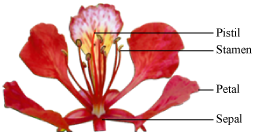 Write definations or describe all the parts of a flower with diagram a flower usually consists of four main parts ccuart Image collections