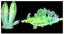 phylum mollusca general characteristics pdf